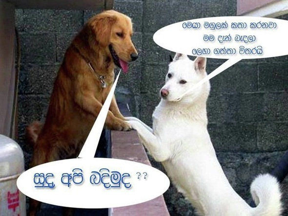 funny dog pictures sri lanka fun photo gallery the best sri lankan